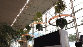 La gare d'Angers se végétalise