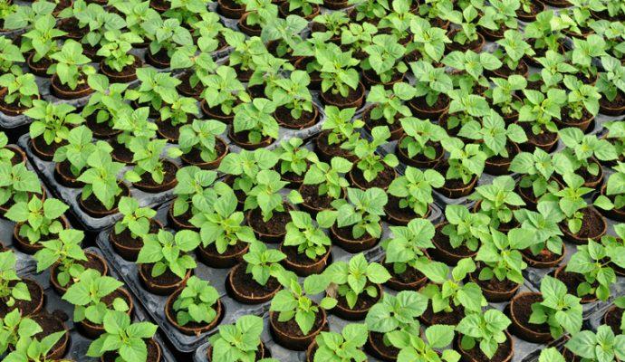 Plandanjou ouvrira en septembre près d'Angers un marché de 3000 m² réservé aux professionnels du végétal