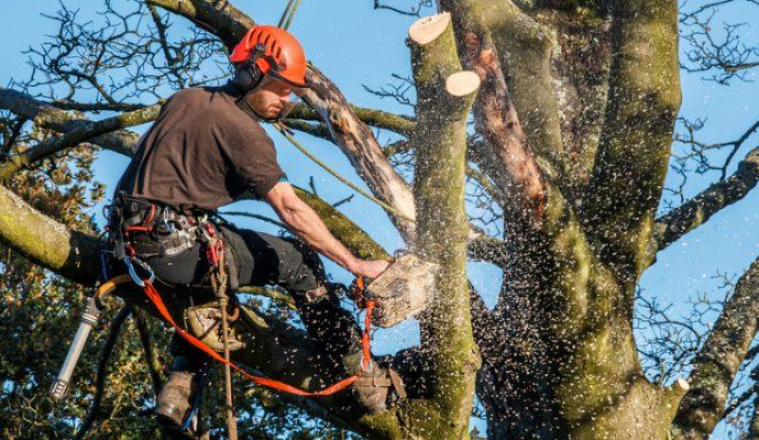Travaux d'abattage d'arbres sur les boulevards du centre-ville