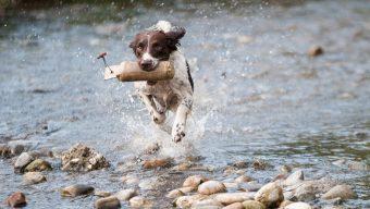 Plusieurs chiens morts après avoir été dans la Loire