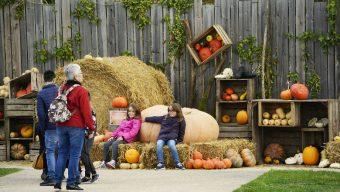 2ème édition de La Fête de l'automne à Terra Botanica