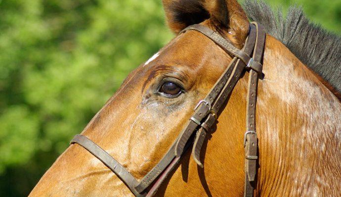 Près de 18 000 visiteurs au Salon du cheval
