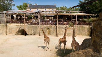 Le Bioparc de Doué-la-Fontaine a rouvert ses portes