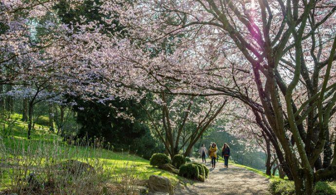 Parc Oriental de Maulévrier : une fréquentation record depuis sa réouverture
