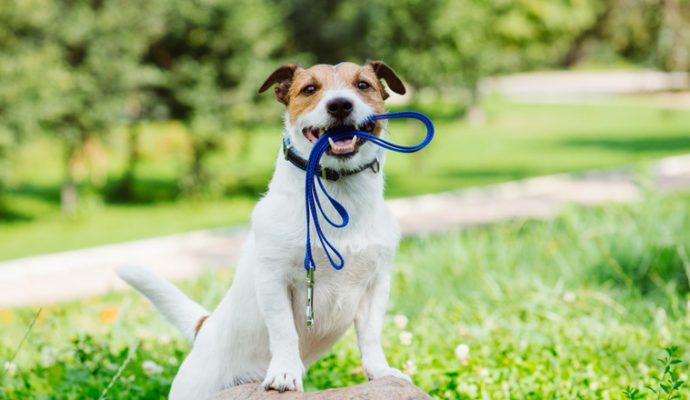 Ville où il fait bon vivre avec son chien : Angers toujours à la traîne