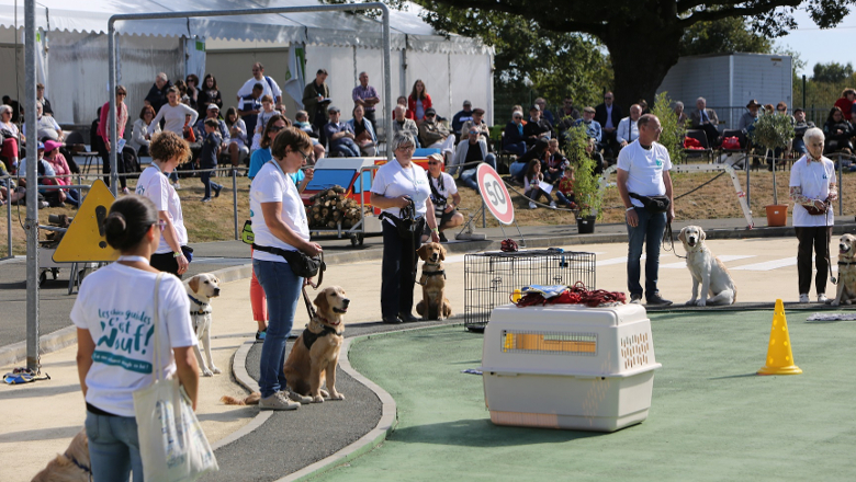 Chiens Guides d'Aveugles