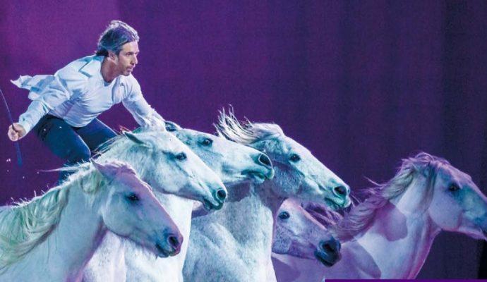 Le Salon du Cheval d'Angers lance la première saison d'« Étoiles Équestres »