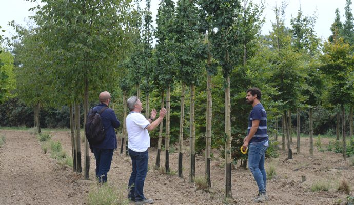 Les nouveaux arbres le long du tracé du tramway plantés à partir du mois prochain