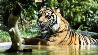 Une saison record pour le Zoo de la Flèche