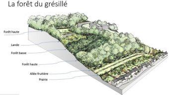 Lancement des plantations au plateau de Grésillé