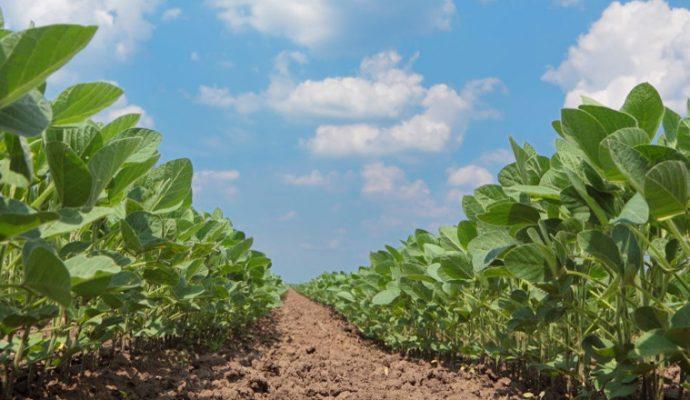 Les agriculteurs du Maine-et-Loire lancent une plateforme pour répondre au besoin de main-d'oeuvre