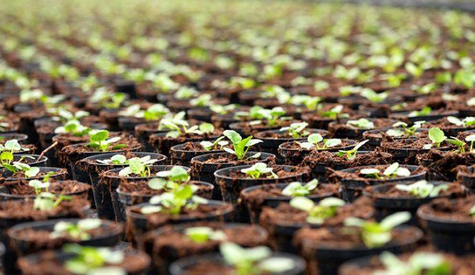 Le Département lance une opération de soutien à la filière horticole