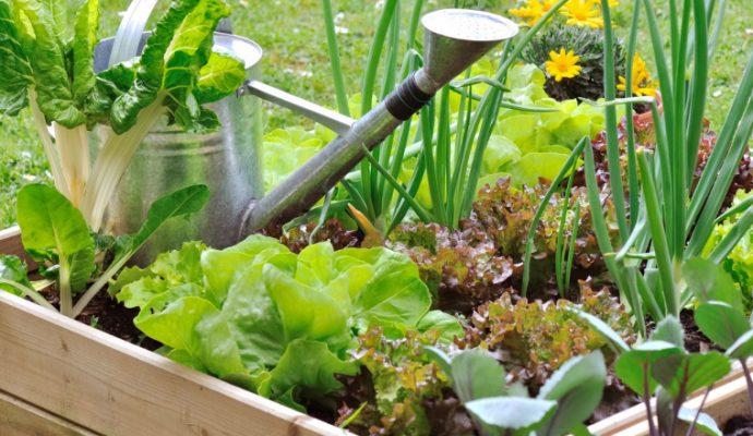 Les jardins familiaux et les jardins partagés rouvriront jeudi 23 avril