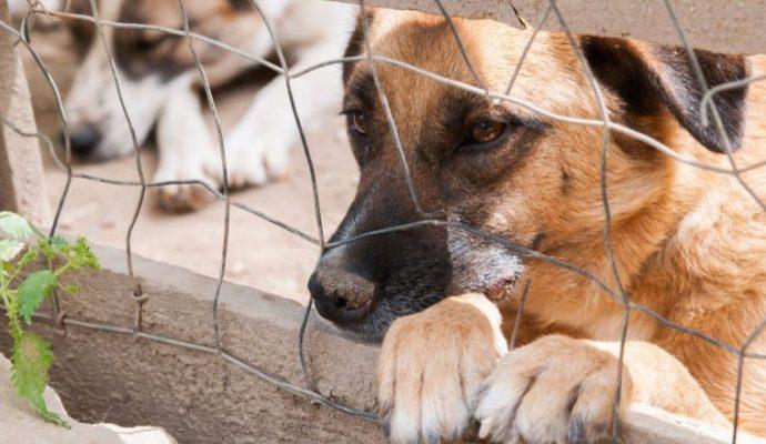 Se déplacer pour adopter un animal va être autorisé