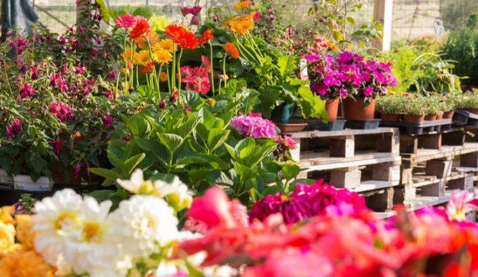 Le Département offre 400 bouquets de fleurs et 1200 jardinières aux Ehpad de Maine-et-Loire
