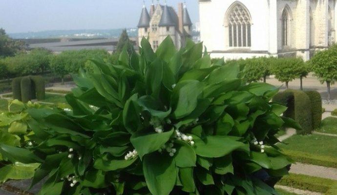 Le muguet du château d'Angers offert aux personnels du CHU