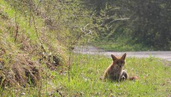 Déconfinement : un appel à la vigilance envers les animaux dans les forêts