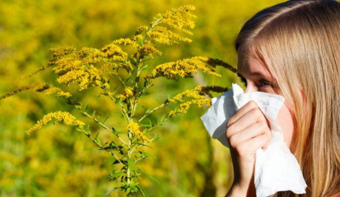 Allergie aux pollens : alerte rouge pour le Maine-et-Loire