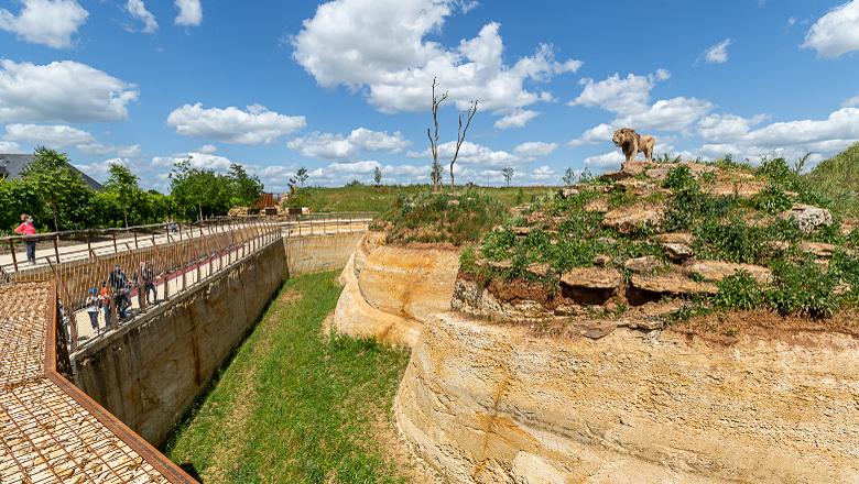 Bioparc Lion