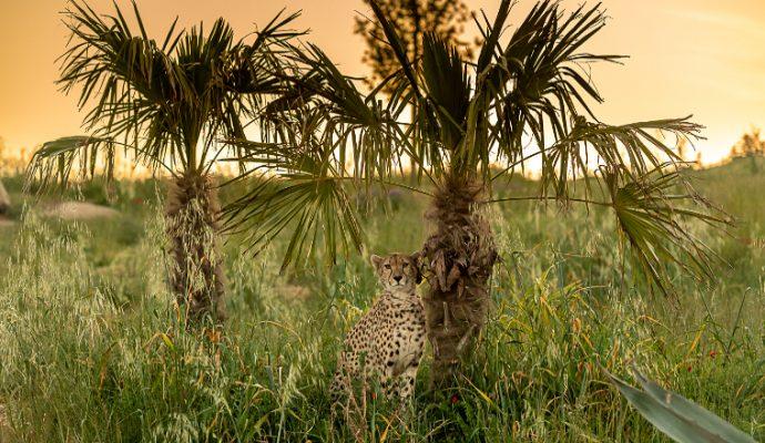Le Bioparc de Doué-la-Fontaine élu 2ème meilleur zoo d'Europe
