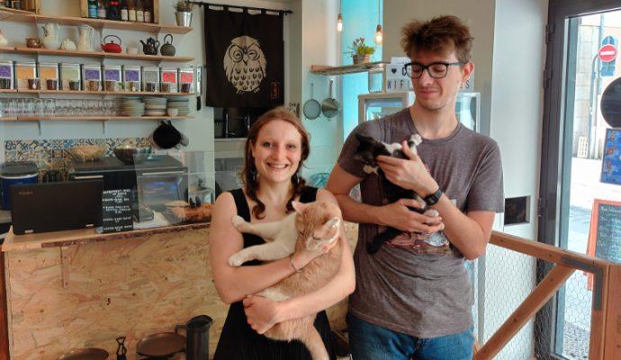 Le premier bar à chats d'Angers ouvre rue de la Roë
