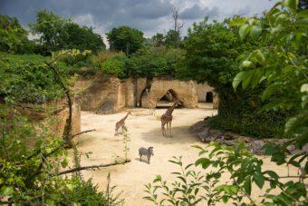 Bioparc de Doué-la-Fontaine
