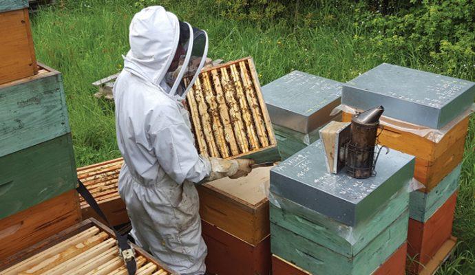 1ère édition de la Fête du miel les 3 et 4 octobre à Bouchemaine
