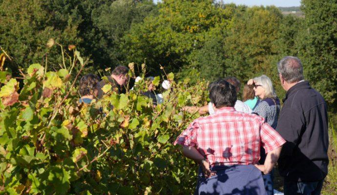 Le Musée de la vigne et du vin d'Anjou s'anime pour les Journées du patrimoine