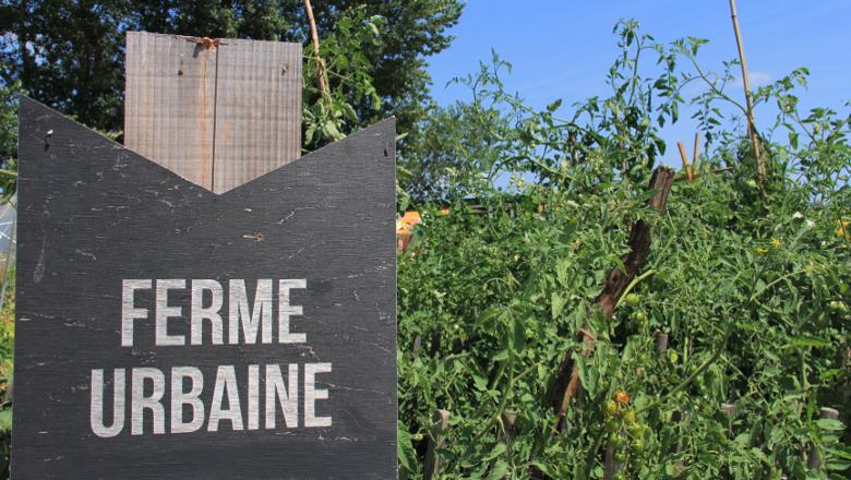 ferme-agriculture urbaine