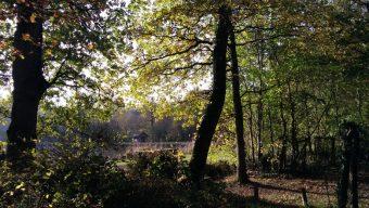 L'accès à la forêt de Longuenée est temporairement interdit