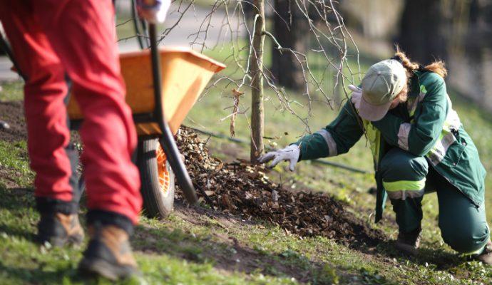La ville d'Angers va planter 51 arbres signaux en 2021