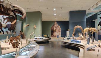 Les musées d'Angers restent ouverts tout l'été : cinq expositions à découvrir
