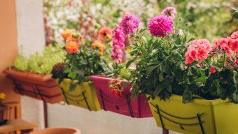 Les inscriptions sont ouvertes pour le concours « Fleurissons Angers »