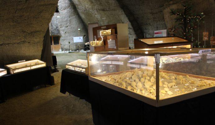 Jusqu'au 19 septembre, le Mystère des Faluns vous propose de découvrir une collection unique de fossiles