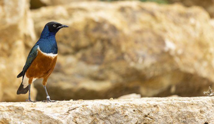 Une volière africaine à découvrir au Bioparc de Doué-la-Fontaine