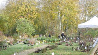 Un des plus grands marchés de rosiers se tiendra du 11 au 14 novembre dans le Maine-et-Loire